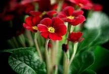 ❀‿❀ cveće ❀‿❀
