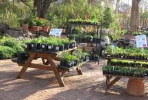 Waterwise gardens / Creative ideas for indigenous water wise gardening