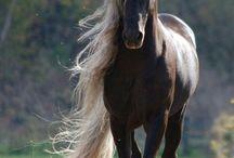 Cavalli che passione! / Passione per i Cavalli