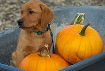 Fall With Fido & Fluffy