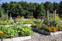 Ogródek ziołowy i warzywny