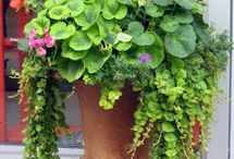 pots et jardiniers
