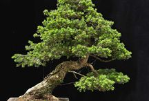Bonsai / Cool bonsai shots from around the web
