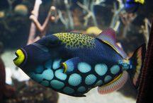Fish inspiration