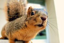 Squirrel Fun / just squirrels / by Katie Clemens
