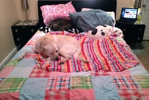 Nap Time / by Sleeps with Dogs