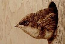 hayvan resimleri panosu