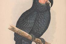 Parrots illustration
