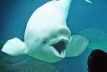 Other marine life
