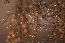Winter Inspiration / Winter wonderland, wintery inspiration taken from nature
