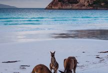 Cape Le Grand  National Park / Australia