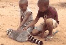 Kid that respect animals