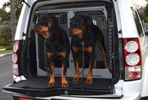 Dogs in TransK9 Dog Boxes / A collection of images of dogs in TransK9 Dog Transit Boxes