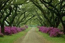 Tutti gli alberi del mondo