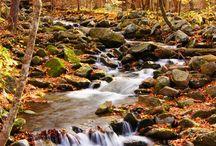 Creek in backyard