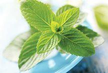 Ellie Loves Natural Health / herbs, natural healing