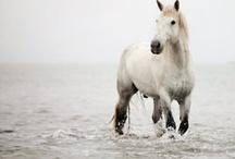 Great Horse photos