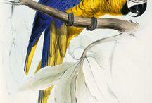 parrots illustrations