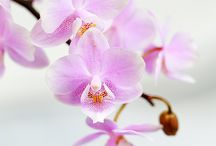 Orchids / My Favourite Flower Orchids