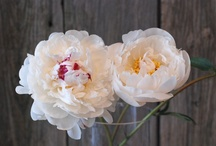 Garden Fragrance / Flowers & Fields with Fragrance