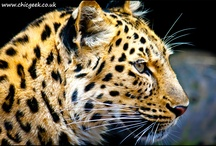 My  Animal Photos / Animals..big, little, scary, sleepy - you'll find them here!