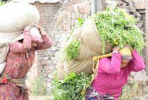 Das Leben in Kathmandu heute / Es geht Berg auf in Nepal. Nach dem großen Erdbeben im Mai 2015 pulsiert das Leben in Kathmandus Straßen wieder. Die Menschen schauen nach vorne und sind fleißig mit dem Wiederaufbau beschäftigt. Sehenswürdigkeiten wie der Durbar Square, der Swayambunath Tempel und auch Bhaktapur wurden wieder für den Tourismus freigegeben.  Worauf wartet ihr also noch..ab nach Nepal!
