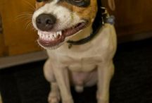 odontologia veterinaria / by raquel ore