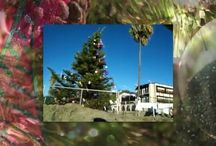 San Diego in winter and life is a beach, Merry Christmas! #vacationrentals #beachrentals #sandiego