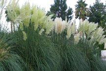 Sivplanter