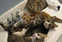 cats / cats kittens etc