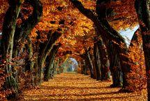 Autumn-Fall <3