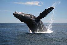 AVH Blog / Atlantic Vacation Homes Blog - Vacation rentals, Cape Ann & Boston's North Shore, travel and more.