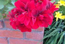 САД СВОИМИ РУКАМИ / Мой любимый сад создан моими руками. Многолетники частично приобретались, частично высевались , а вот летники выращены из семян через рассаду и каждый год радуют феерией красок. Я хочу поделиться красками подмосковного лета с Вами. Приятного просмотра! т.8 916 591 78 95 Наталия