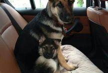 Kutyákok :)