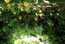 Garden of Alatonero