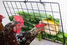 Chickies / Chicken Coups & ideas