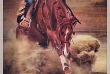 Booyah Banjo / Reining horses