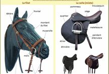 cheval galops