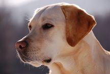 Koirat - DOGS / Kaikkee koiriin liittyvää