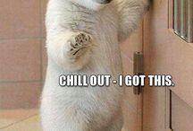Polar Bear love!