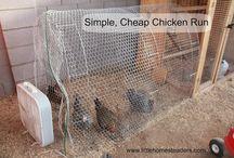 Chickens / by Megan Velten