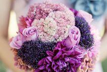 Purple / Plum / Berry