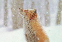 Natura / Fox