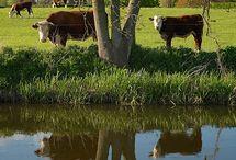 maaseutu ja eläimet