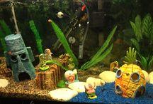 Aquariums / All sorts of Aquarium Fish Tanks!