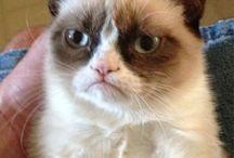 Grumpy Cat / She's a gem. ^_^