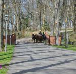 Pferde und Kutschen - horses and buggies / Pferde und Kutschen, horses and buggies, http://www.feenart.de/fotografie/galerie/kutschen/ www.FeenArt.de | Claudia Böttcher