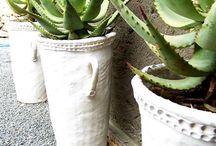 Garden & Plants / Plants & gardening  / by Carrie Carter