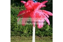 Ostrich Feathers Centerpieces / by Feather Paradise