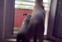Koma  & Karma  (this love never ends) and Dogfriends / Our Dogs...some of my best friends never say a Word to me!!!